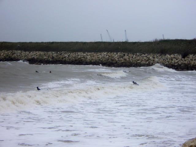 Surf sur les vagues