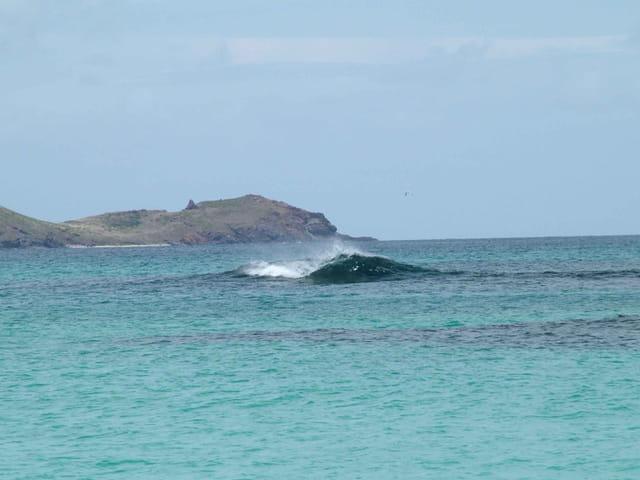 Surf' surf' surf'...