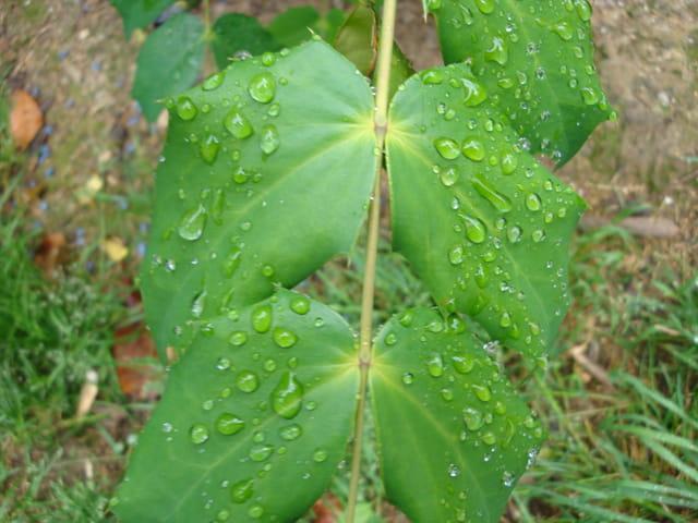 Symétrie feuilles et gouttes d'eau
