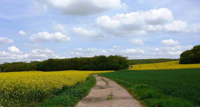 Symphonie en jaune et vert