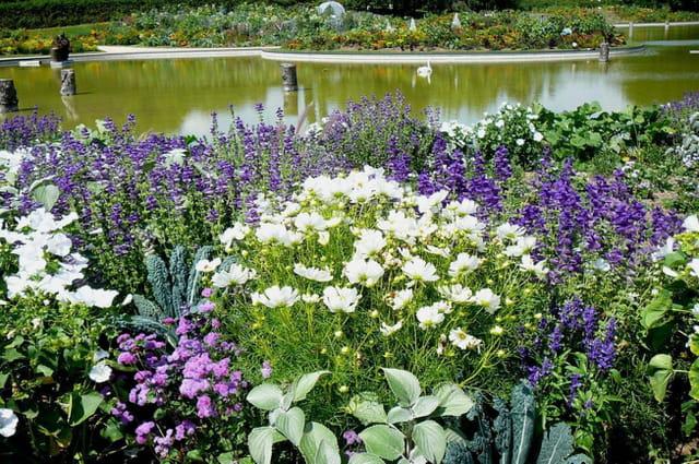 Symphonie en parme  et blanc - Parc floral de Vincennes
