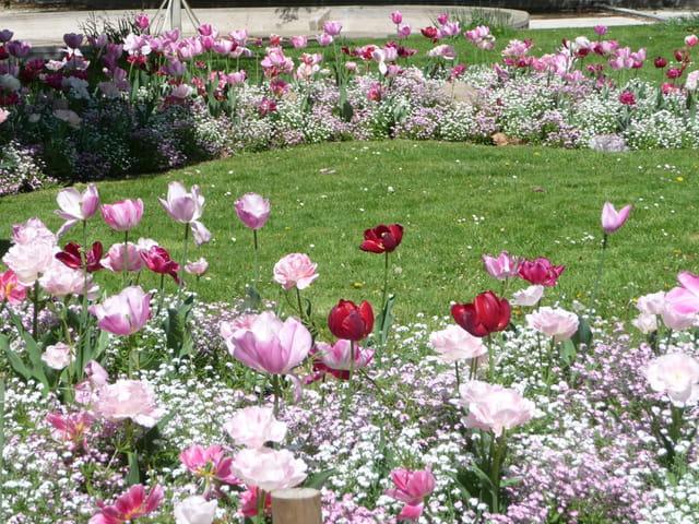 Symphonie en rose