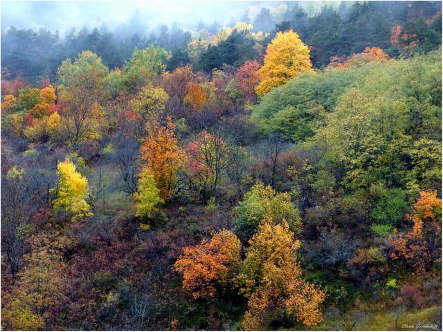 Tableau d'automne...