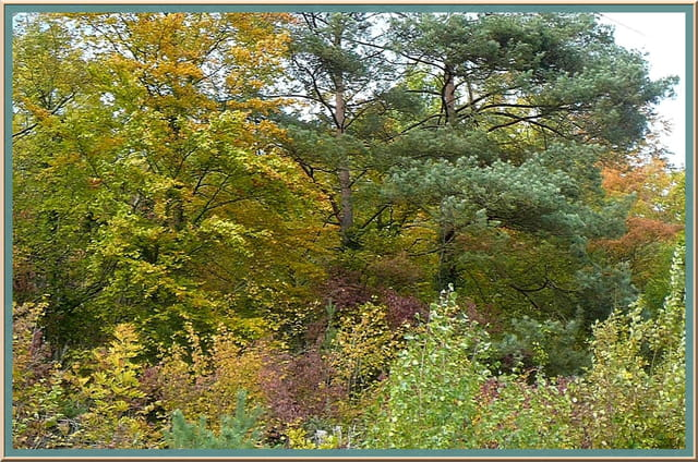 Tableaux d'automne à Gravigny - 4