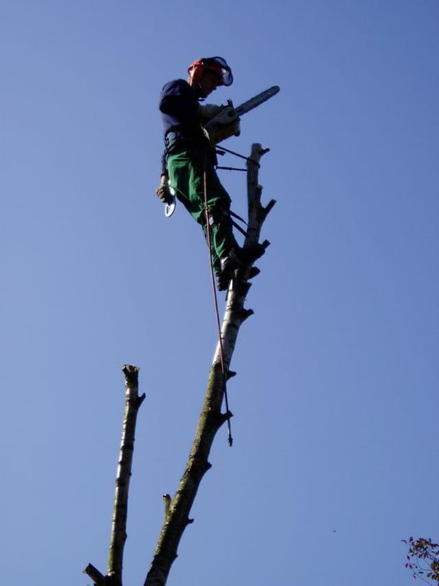 Taille acrobatique