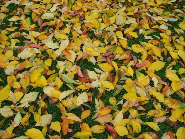 Tapis d'automne