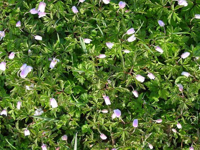 Tapis de fleurs des champs