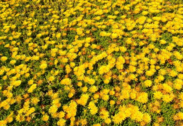 tapis de fleurs jaunes par ildiko lorinszky sur l 39 internaute. Black Bedroom Furniture Sets. Home Design Ideas