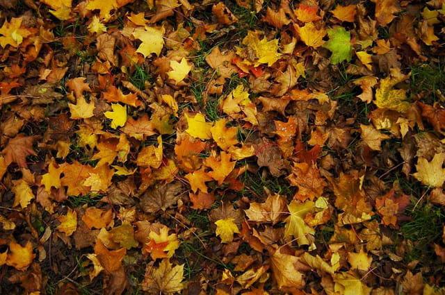 Tapis des feuilles