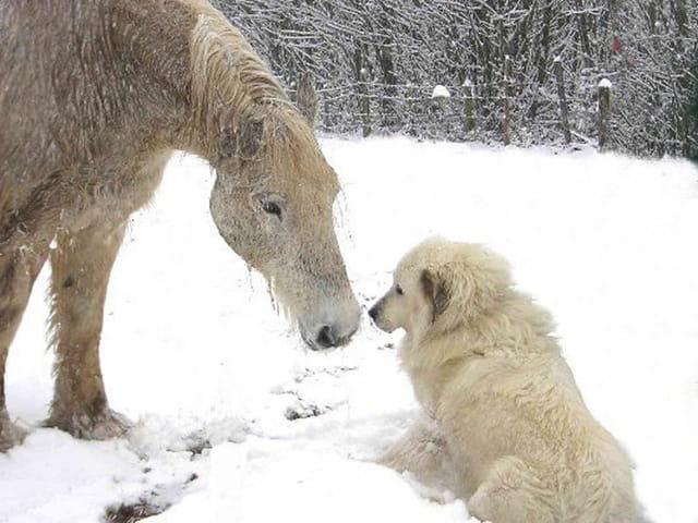 Tendre amitié