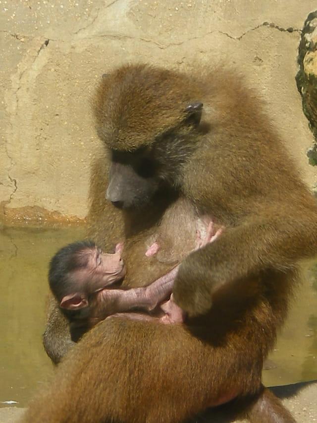 Tendresse d\'une mère