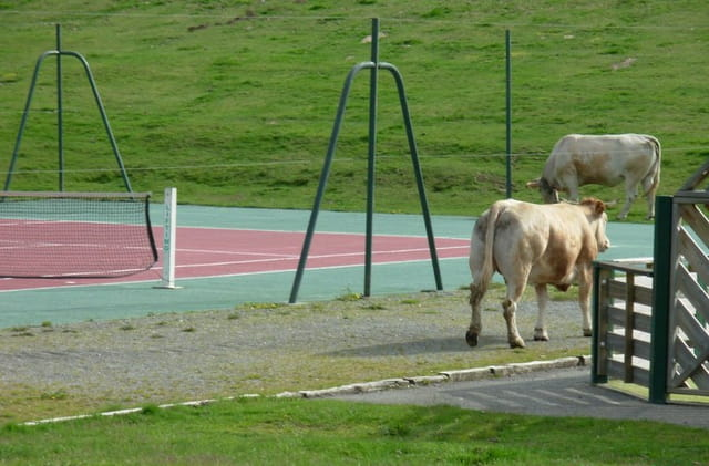 Tennis de Vaches