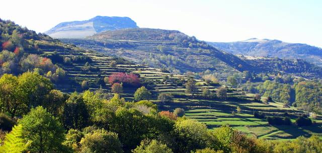 Terrasses de la montagne ardéchoise