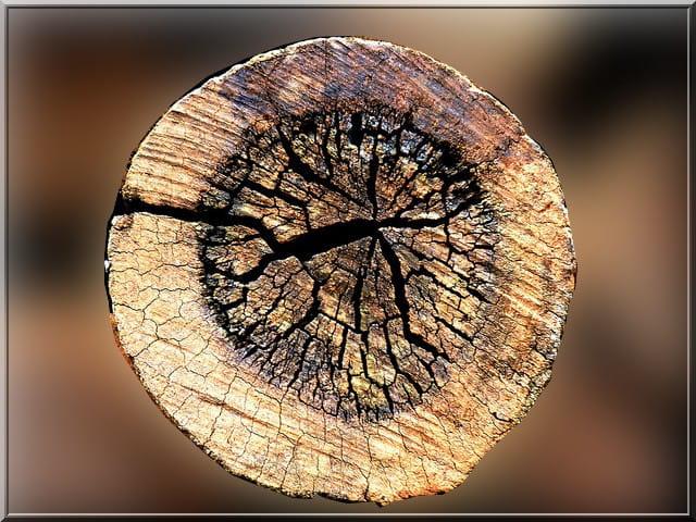 Textures d arbre