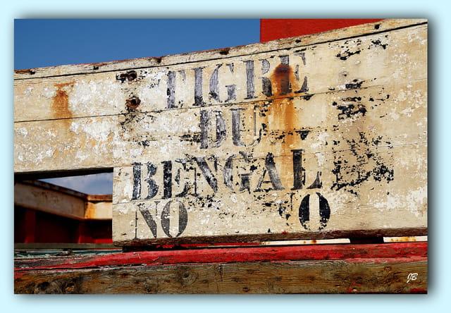 Tigre du Bengale...