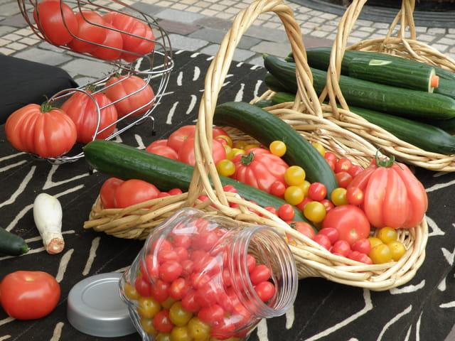 Tomates et concombres