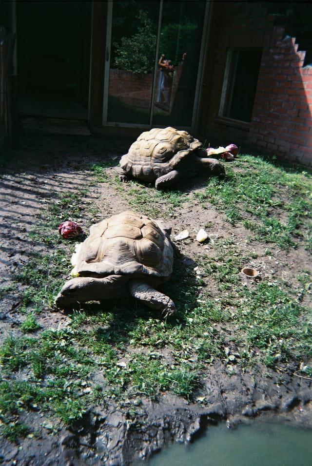Tortues au zoo de Lille