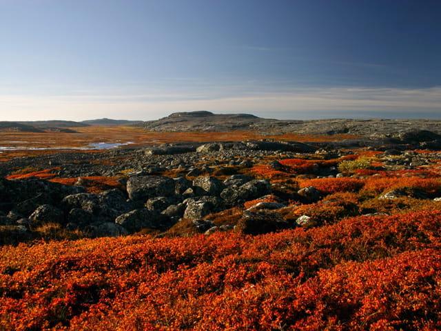 Toundra et couleurs d'automne
