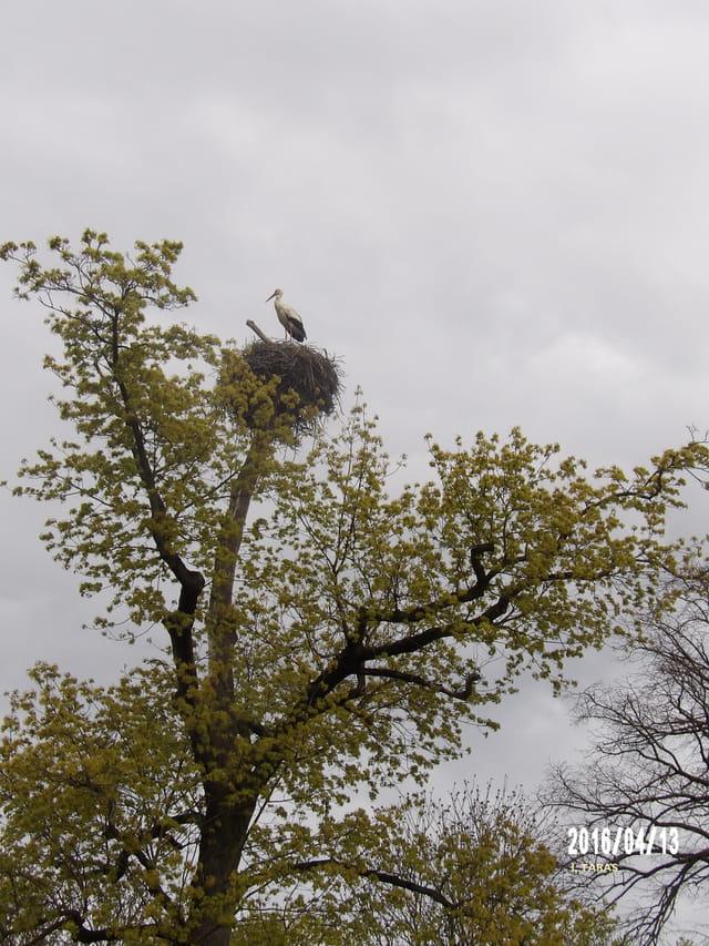 Tout en haut de l'arbre