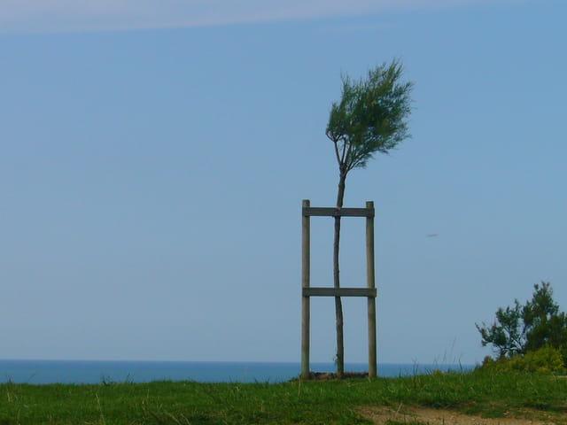 Tout seul dans le vent