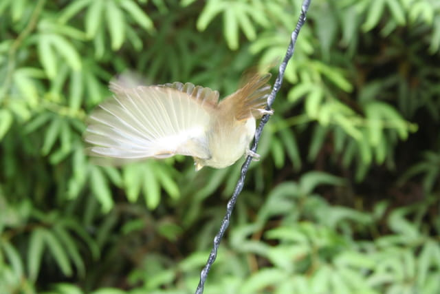 Toutes ailes déployées