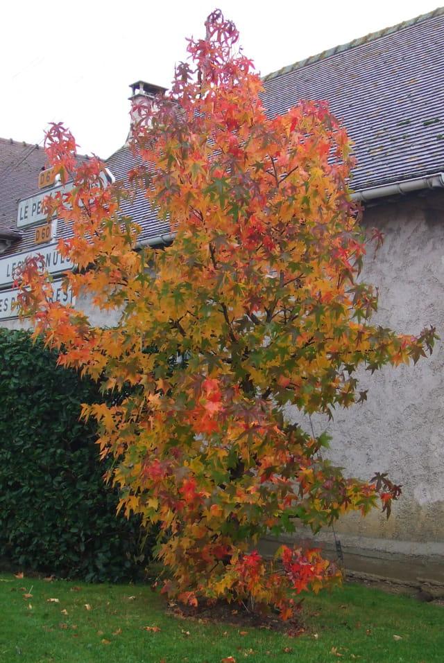 Toutes les couleurs de l'automne rassemblées