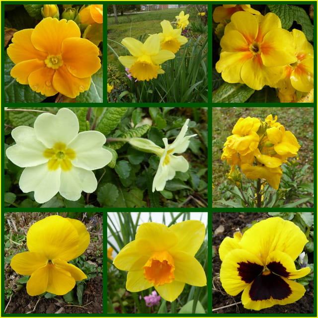 Toutes les fleurs jaunes du jardin