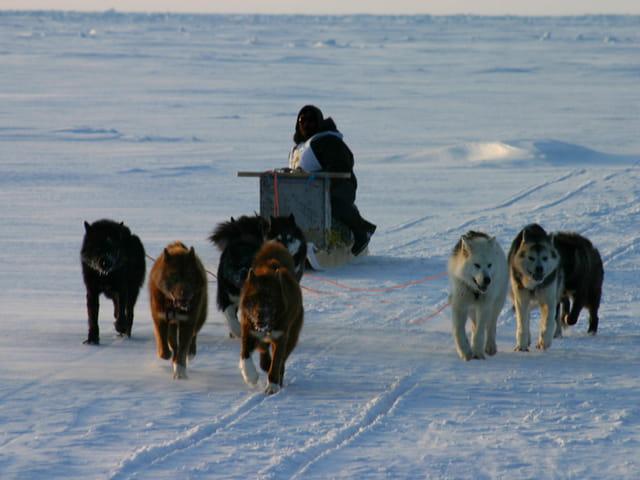 Traîneau à chiens