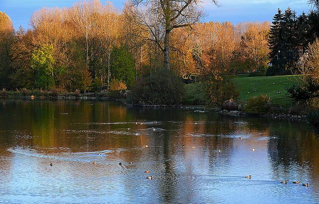 Tranquilles sur l'étang