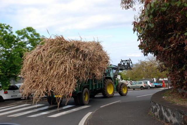 transport de cannes à sucre