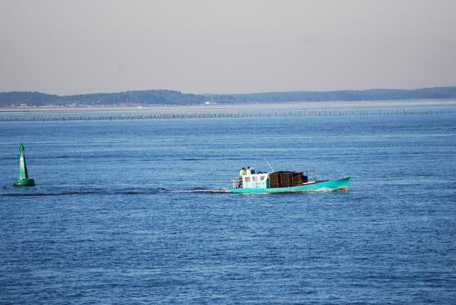 transport des huitres sur le Bassin d'Arcachon