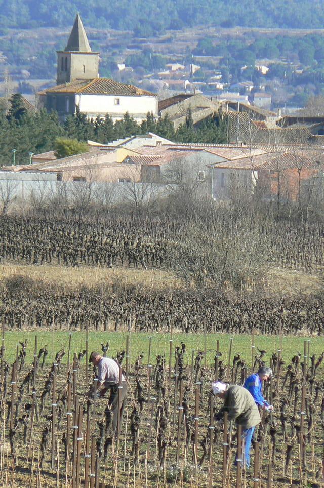 Travail à la vigne en hiver