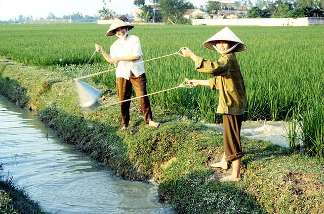 Travaux dans les rizières
