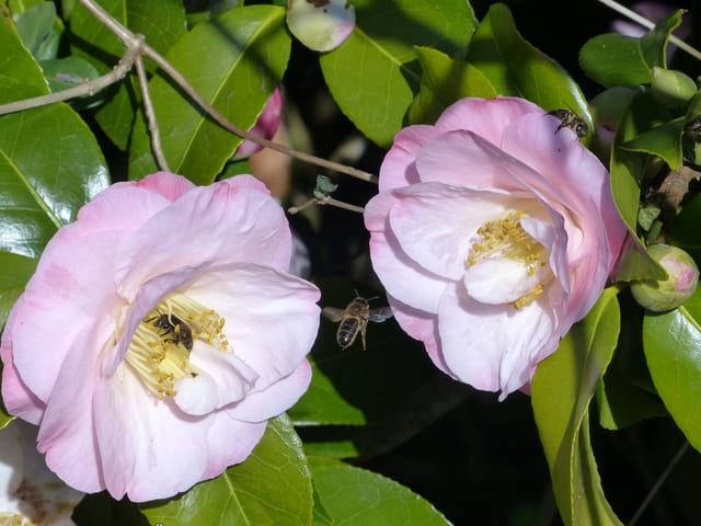 Trio d'abeilles