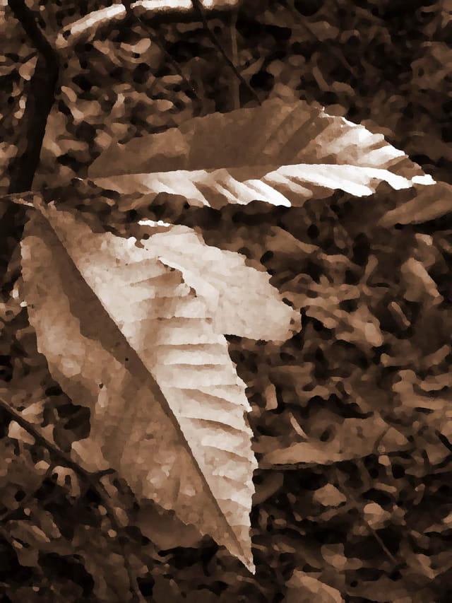 Trois feuilles sépia