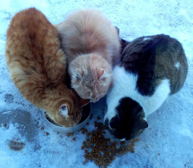 Trois p'tits chats...