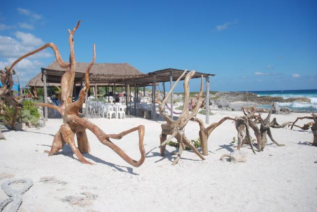 troncs d'arbre sur la plage