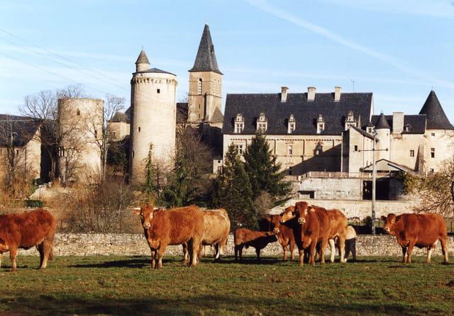 Troupeau dans le centre de la France.