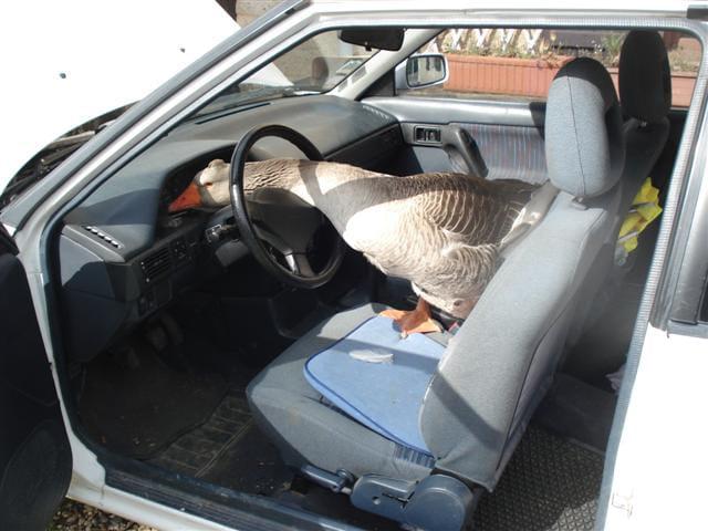 Tu visites ma ferme, je visite ta voiture !