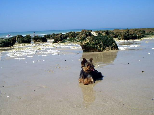 Tweed a la plage