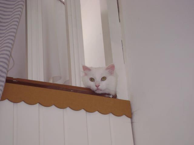 Un amour de chat!