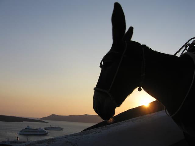 Un âne, le soir
