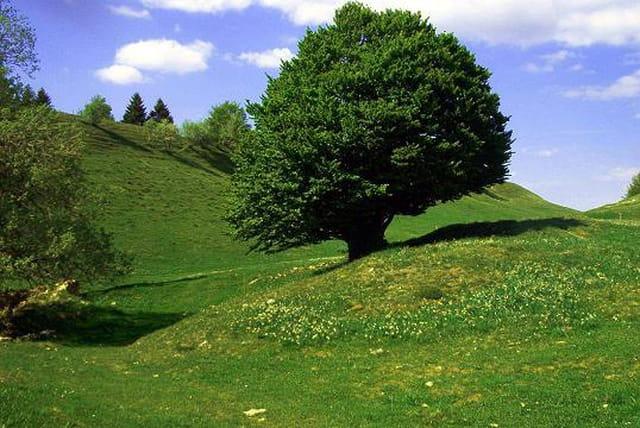 Un arbre dans les nuages