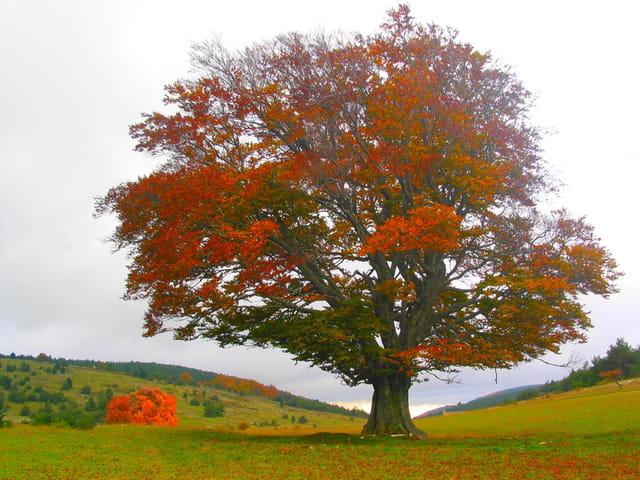 Un arbre de plus