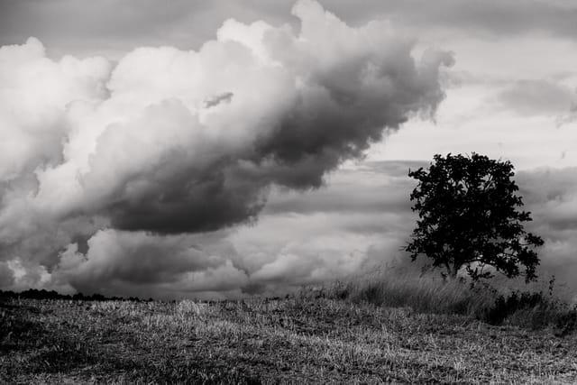 un arbre en plaine