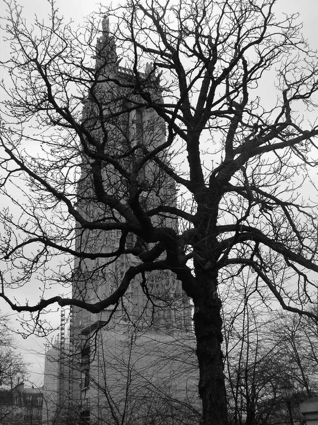 Un arbre en ville