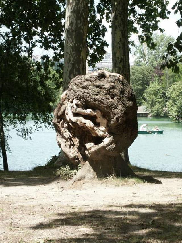 Un arbre exceptionnel