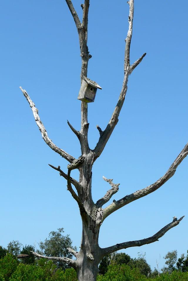 Un arbre mort