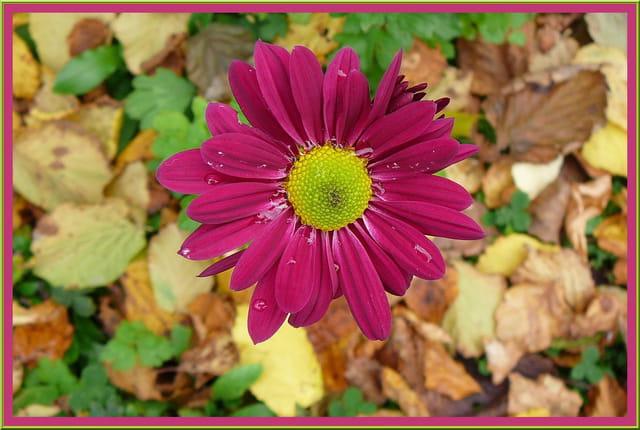 Un automne coloré - 1
