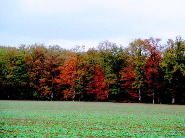 un automne coloré